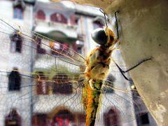 Dragon Fly 02 by <b>Biplab Kumar Pal</b> ( a Panoramio image )