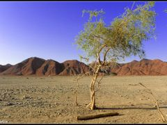 The guardian of Sahara (revision 2013) by <b>&ri.co</b> ( a Panoramio image )