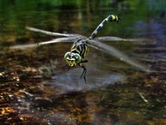 Hover Craft by <b>Rebecca Capel</b> ( a Panoramio image )