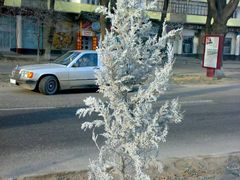 Frosty winter in Khujand - Морозная зима в Худжанде by <b>KPbICMAH</b> ( a Panoramio image )