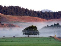 late summer mist in Karakariki by <b>Dave Moran</b> ( a Panoramio image )