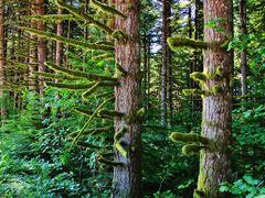 Oregon Moss... :)  ( Sat. July 13, 2013 ) by <b>John J. Slovinec, Sr.</b> ( a Panoramio image )