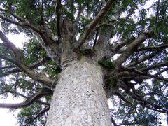 Parry Kauri Park n.1 by <b>Flavio Snidero</b> ( a Panoramio image )