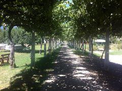 Parron by <b>Felipaldi </b> ( a Panoramio image )