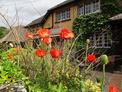 Con flores, rojas amapolas, se ve todo mas armonico by <b>AnaMariaOss</b> ( a Panoramio image )