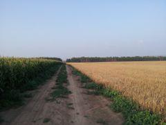 дорога в поле by <b>VovanSX</b> ( a Panoramio image )