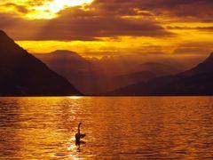Tanzender Schwan in den ersten Sonnenstrahlen  by <b>Ruedi ?(?o?)</b> ( a Panoramio image )