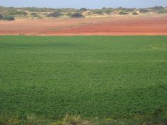 Fields by <b>CarmelH</b> ( a Panoramio image )
