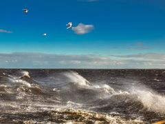 The Storm Gulls above The Gulf Of Bothnia, 2.7.2012, 19:41 by <b>jknaus</b> ( a Panoramio image )