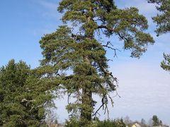 Rootsi Kuninga mand Kuusalus by <b>Uku Praks</b> ( a Panoramio image )