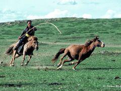 Mongolia by <b>luciano bovina</b> ( a Panoramio image )