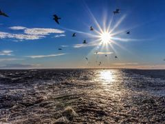 Gulls above the Gulf of Bothnia, Finland, 2.7.2012, 21:11  by <b>jknaus</b> ( a Panoramio image )
