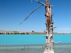 A victim of the Tekapo-Pukaki hydro scheme by <b>NZ Frenzy Guidebook..www.NzFrenzy.com</b> ( a Panoramio image )