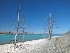 Ghost trees of Tekapo by <b>NZ Frenzy Guidebook..www.NzFrenzy.com</b> ( a Panoramio image )