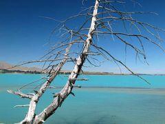 Treekapo by <b>NZ Frenzy Guidebook..www.NzFrenzy.com</b> ( a Panoramio image )