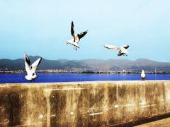 ?? ?? by <b>CHOPIGU</b> ( a Panoramio image )
