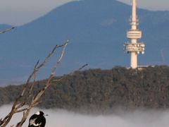 Black mountain tower and Magpie by <b>Paul Strasser</b> ( a Panoramio image )