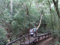 Trilha junto ao Rio Mimoso no Parque das Cachoeiras em Bonito -  by <b>Paulo Yuji Takarada</b> ( a Panoramio image )