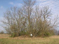 Kivikalme, 1. aastatuhat by <b>Uku Praks</b> ( a Panoramio image )