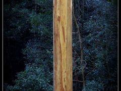 Lawson bush by <b>AlanDaniel</b> ( a Panoramio image )