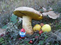 Kuca Velikog Strumfa - Hous of Papa Smurf..... by <b>kukipecurka</b> ( a Panoramio image )