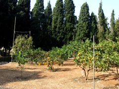 Garden in Carmelit Monastery, Haifa by <b>Loner</b> ( a Panoramio image )