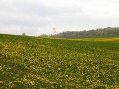 dandelion sea 3 by <b>Jan Madaras</b> ( a Panoramio image )